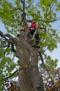 While these injury prevention measures have been specifically tailored for tree-trimmers, they can apply to any workers who do their jobs at elevated areas.