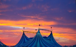 A tragic circus accident that occurred this past May has led to Feld Entertainment receiving a serious OSHA citation and the maximum possible OSHA fine.